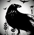 ShadowsCrow avatar
