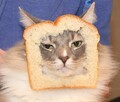 -CAT- avatar