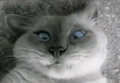 NoboKik avatar