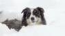 WinterLIVE avatar