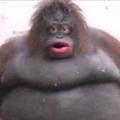 Notorious_Jack avatar