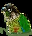 HexaBird avatar