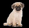 pug2009 avatar