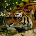 GamingTiger4 avatar