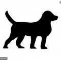 Evie1 avatar