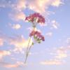 Stars2ndlight avatar