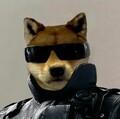 doggo_doggo avatar