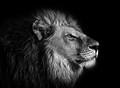 Lionking236 avatar
