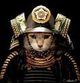 Tokeda71 avatar