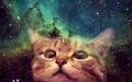 spacek1tty avatar
