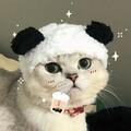 meowu avatar