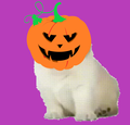 FISHdotCOM avatar