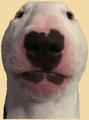 notanon avatar