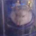 MyUsernameisDOGE avatar