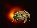 VoidFrogs avatar