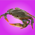 stillMitch avatar