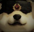 updoge78 avatar