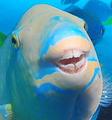 Bluerabbitgamez avatar