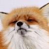 SukiDoodles avatar
