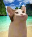 pop cat on the beach avatar