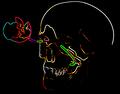 Liedewij avatar