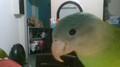 parakeet123 avatar