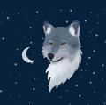 Nightofwolfs avatar
