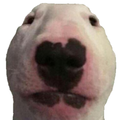 YourPet avatar