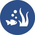 Hydrolagus avatar
