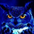 DinoDisc avatar