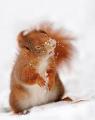 minesquirrel12 avatar