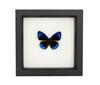 ButterflieLand sp