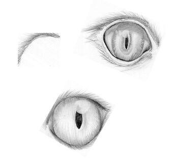 Cat Eye Study Sketches Minecraft Blog