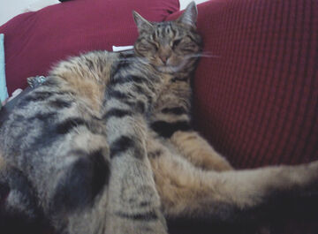 cat.resting Minecraft Blog
