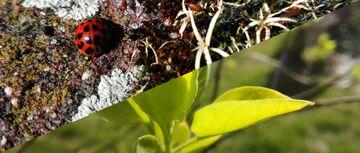 Nature Walk - photos & videos Minecraft Blog