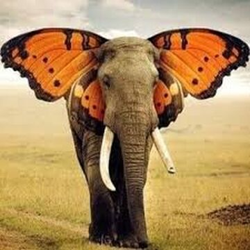 butterfly elephant Minecraft Blog