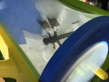 Caught a dragonfly Minecraft Blog