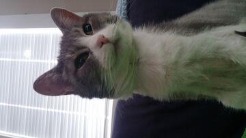 my cats Minecraft Blog