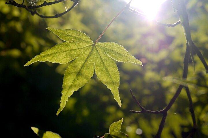 Popular Blog : Little Light (Continued) CE