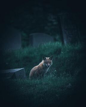 The screaming fox, a short story Minecraft Blog