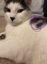 I put ice on Whiskers! Minecraft Blog