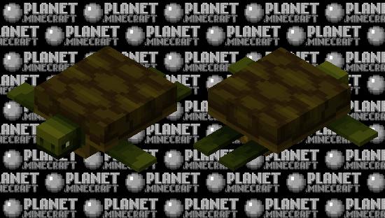 Emmanuel the Tortoise   🐢 Minecraft Skin