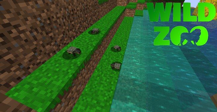 Wetland Turtle