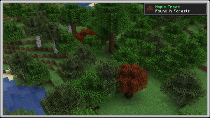 Maple Trees in Forests