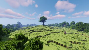 Forest Clearing Minecraft Map & Project