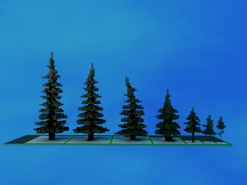 7 spruce trees bundle Minecraft Map & Project