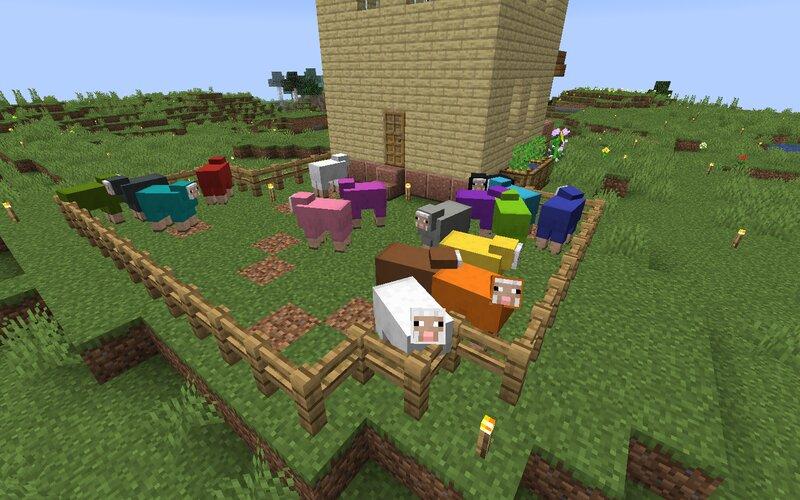 Backyard with sheep
