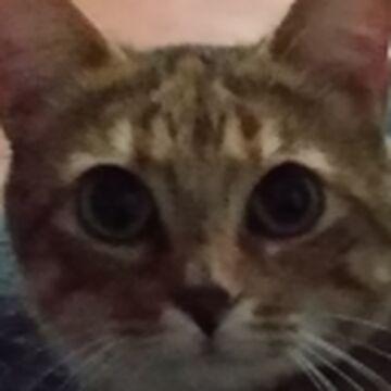 Happier Cat Sounds Minecraft Texture Pack