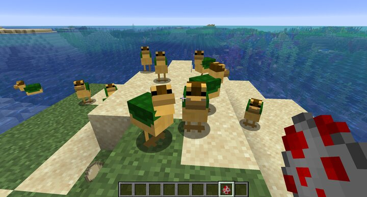 Turtle Duck PACK