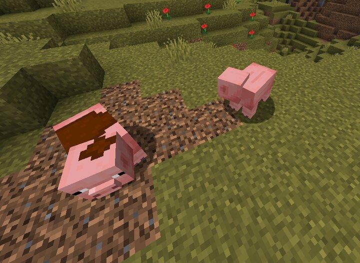 Muddy pig and normal pig